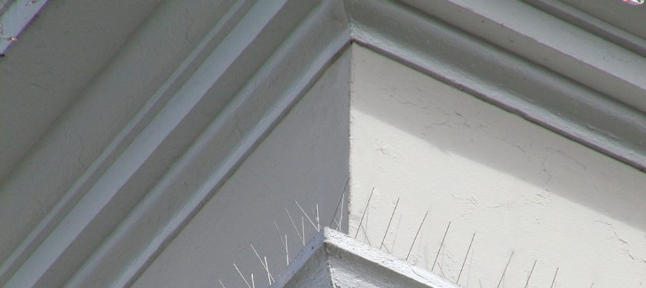 Spikes being used as a method of bird control and deterrent